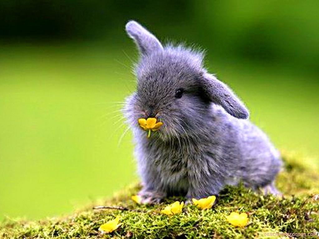 El conejito y la flor