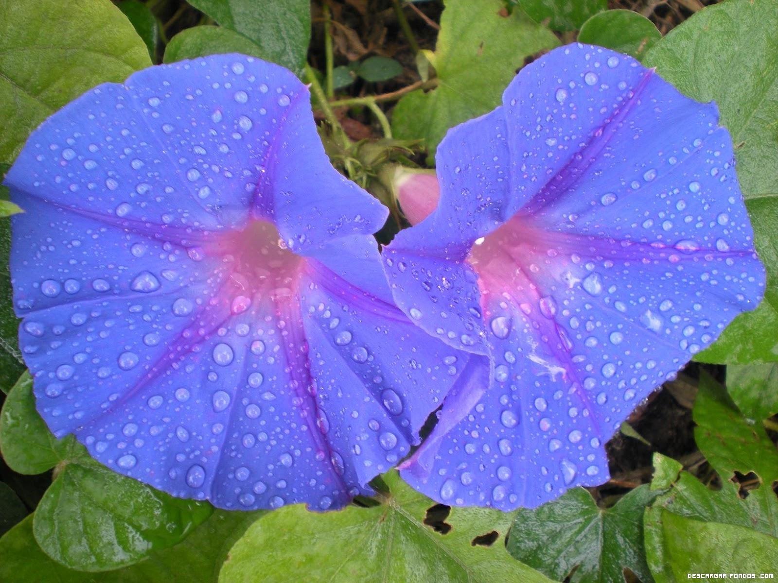 Flores moradas después de la lluvia