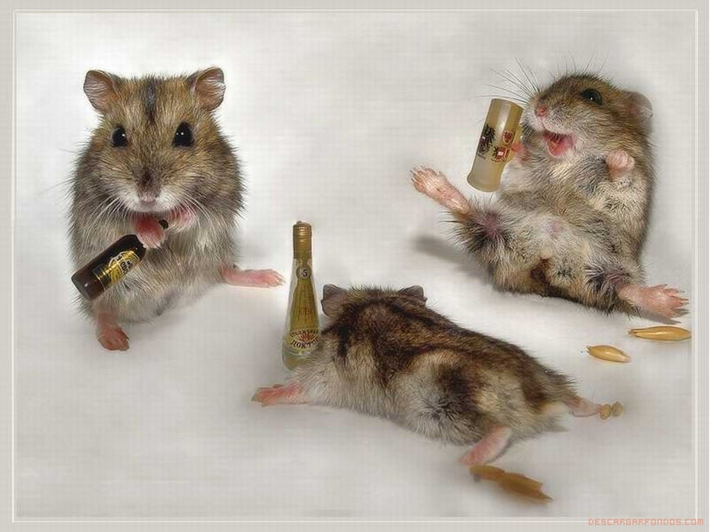 Hamsters borrachillos