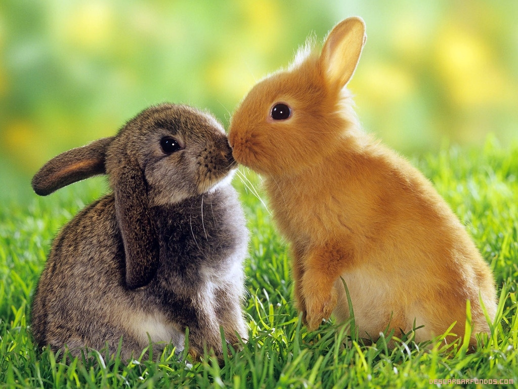 Pareja de conejitos dandose un besito