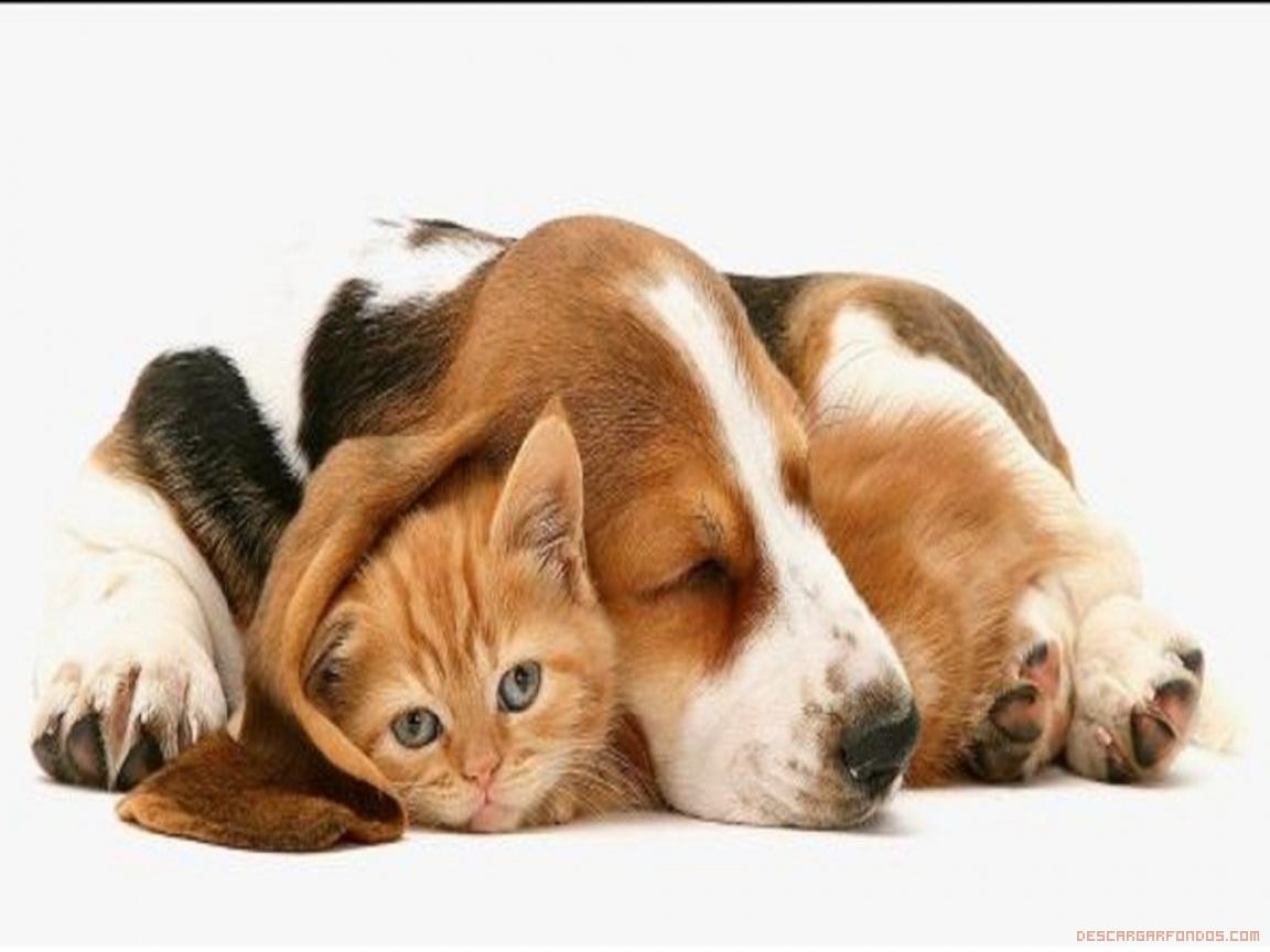 Ver fotos de perritos cachorros 84