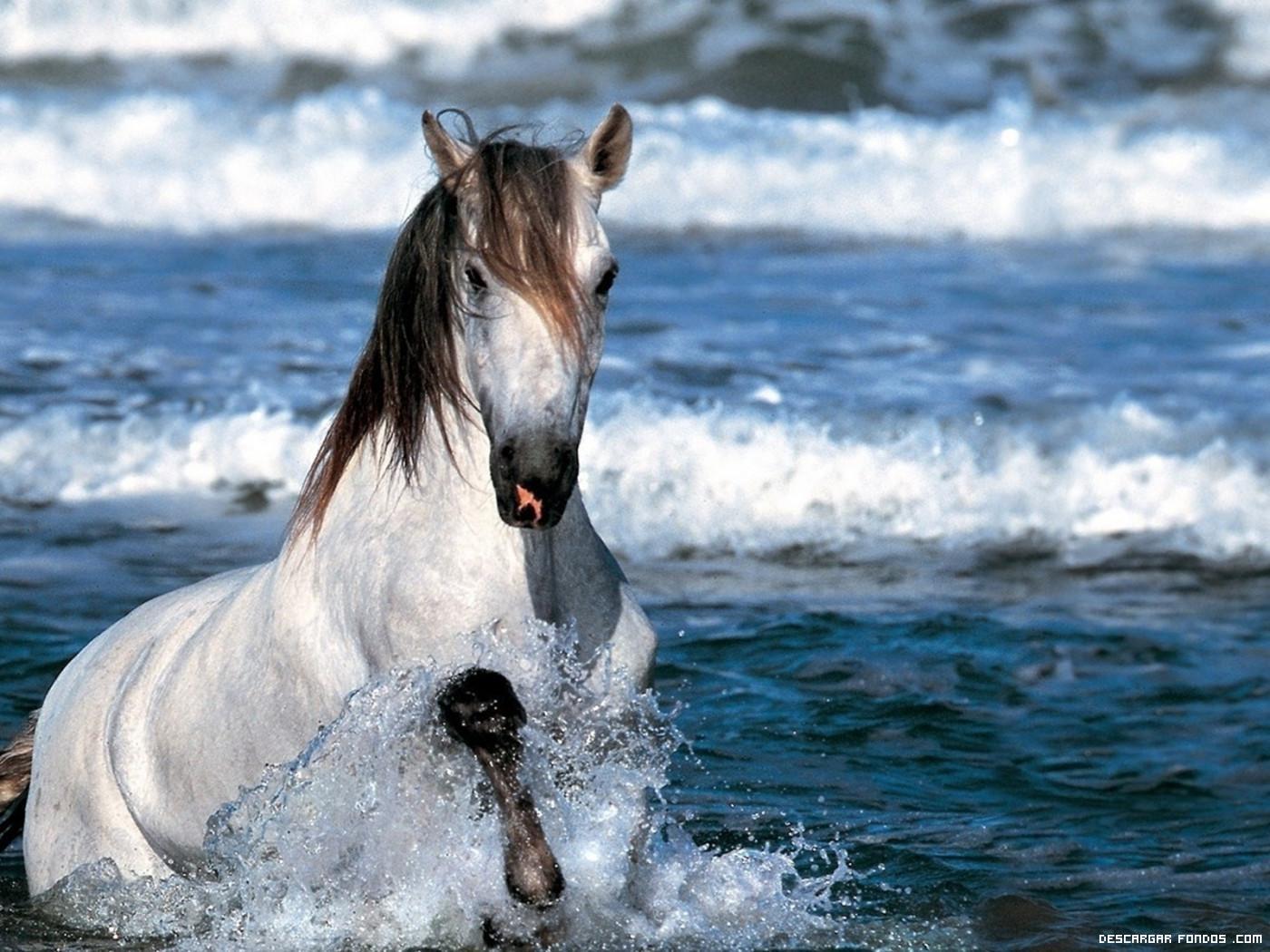 Caballo saliendo del agua