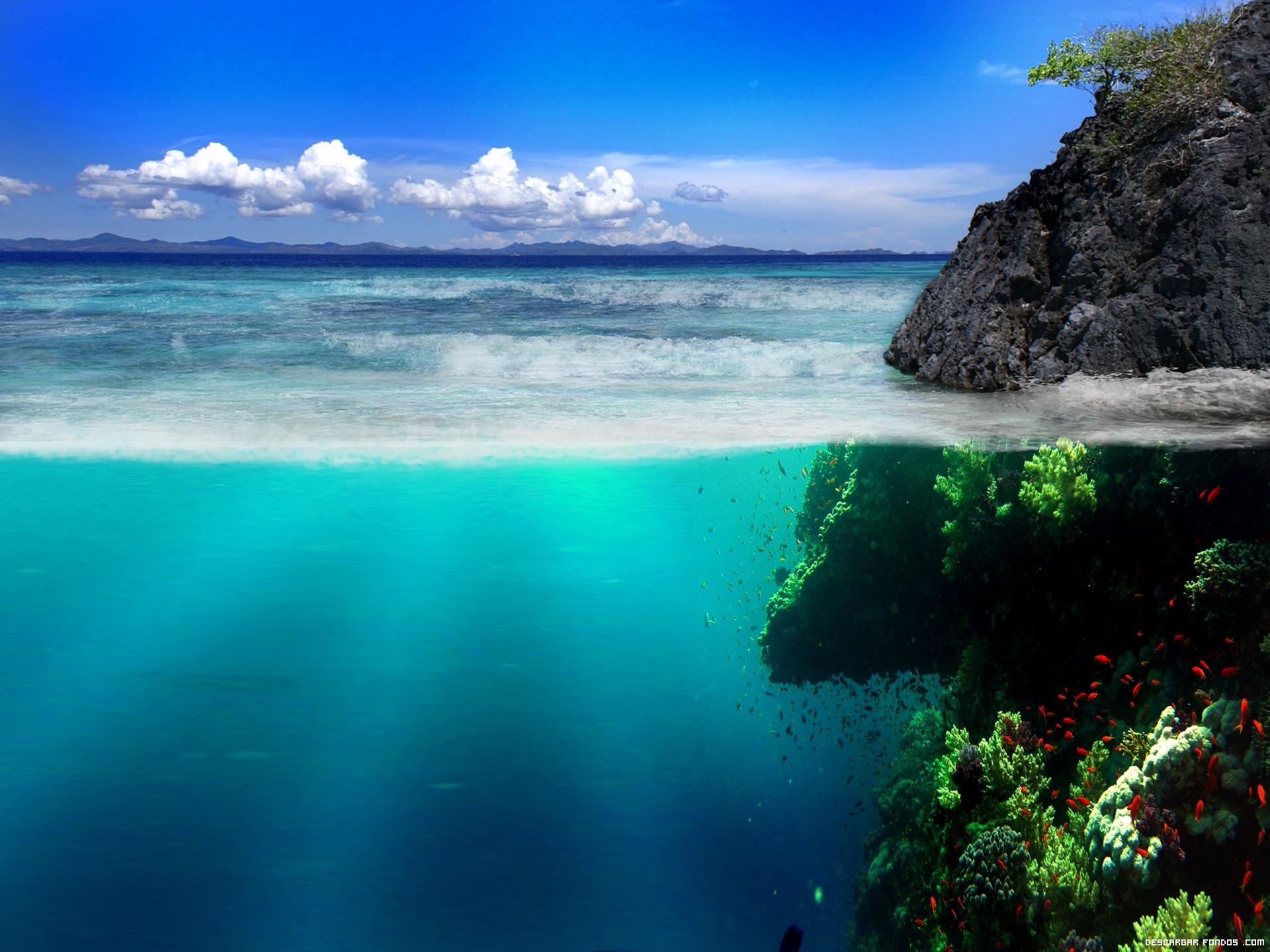 Arriba y abajo del océano