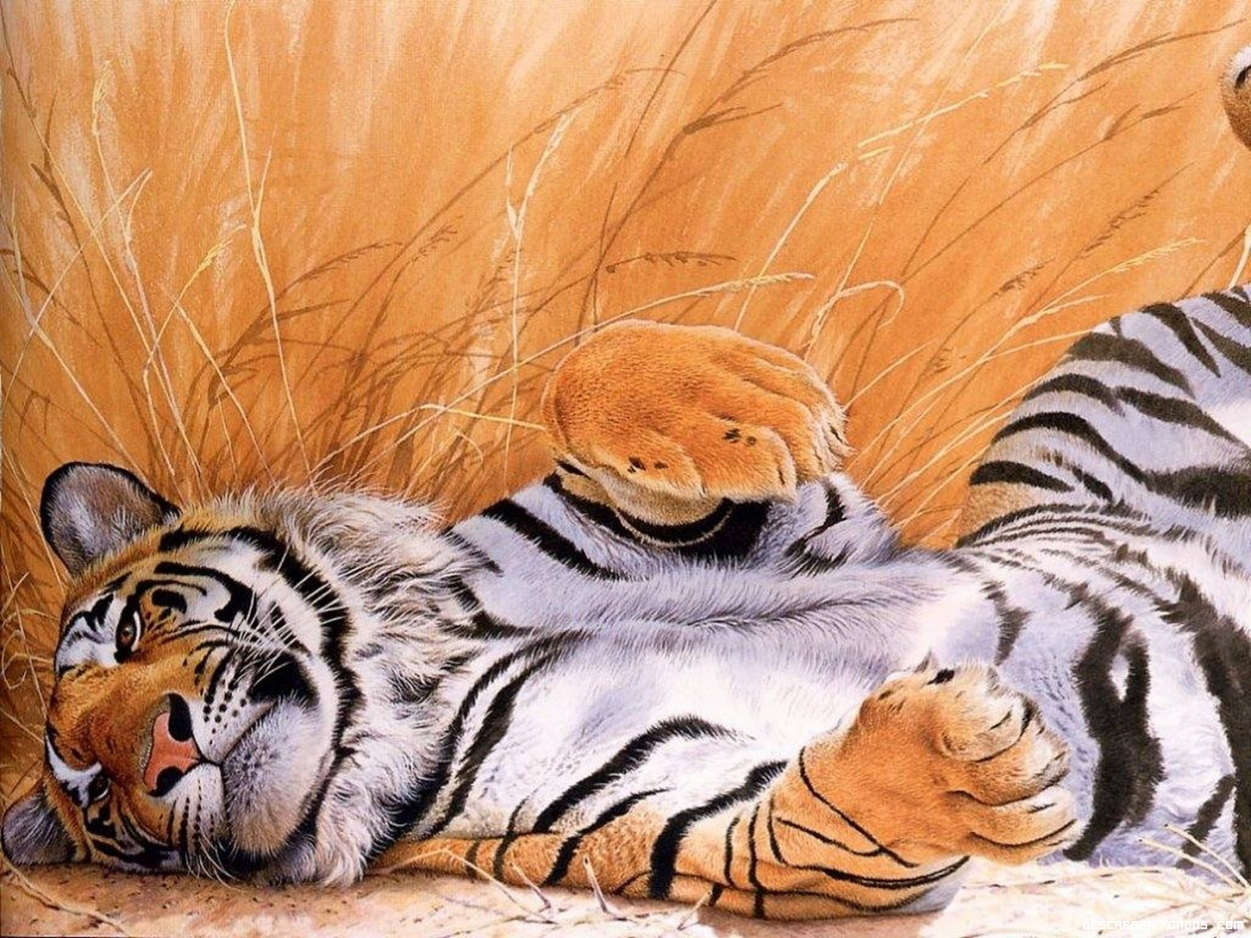 Tigre juguetón