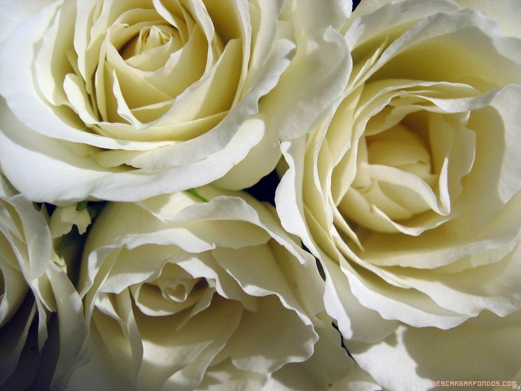 Tus flores preferidas