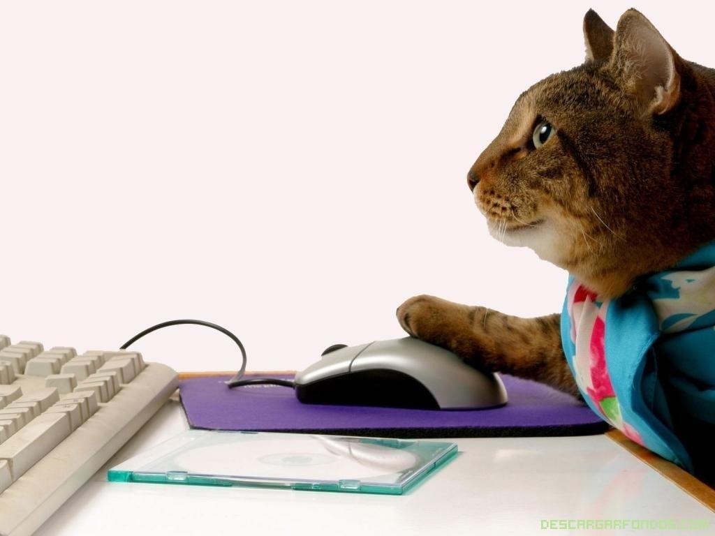 fondos de pantalla de gatos y perros: