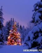 Bosque navideño