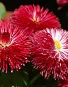 Bellas flores rojas