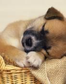 Dulce cachorrito