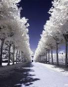 Camino de árboles blancos