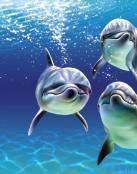 El trío de delfines