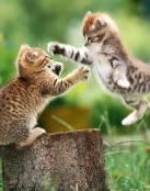 Gatitos brincando
