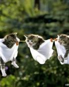 Gatos colgados
