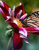 La mariposa y la flor