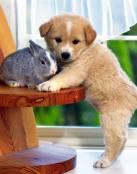 Los amigos inseparables