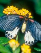 Una bella mariposa