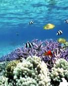 Arrecife marino