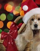 Perrito de navidad
