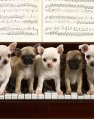Cachorros en el piano