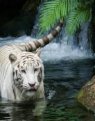 Tigre blanco bajo la cascada