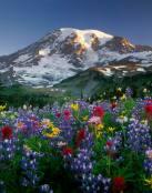 Un campo de vistosas flores
