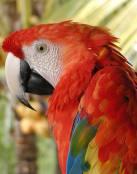Un colorido guacamaya