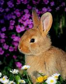Un tierno conejito