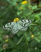 Una mariposa en el paisaje