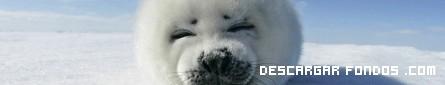 Una tierna foca blanca