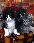 Familia de gatitos.