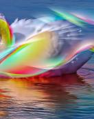 Cisne de colores mágicos