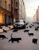 Los gatos negros toman la ciudad