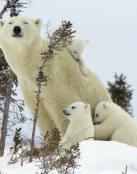 Mamá con sus pequeños