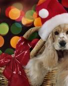 Perro vestido de Santa Claus