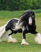 Pequeño caballo