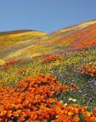 Colinas de flores
