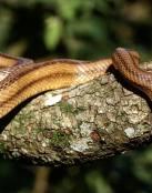 Serpiente en el árbol
