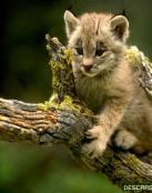 Gato lindo asustado