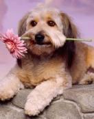 Perro Romantico